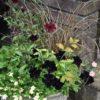 ブラックな虫と寄せ植え