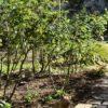 春へ向けての花壇の整理&不思議な今年のこぼれ種メンバー