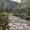 右花壇の植え替え 新入りアジュガ フロステッドジェイド