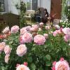 5月の妹んちのバラだより