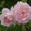 2番花のERたち フレッシュな2008