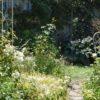 お盆前の庭とボレロ
